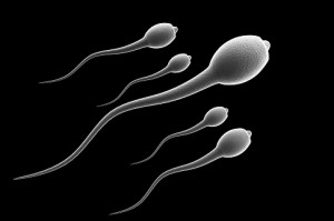 sperm cultivation