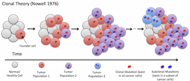tumor heterogeneity
